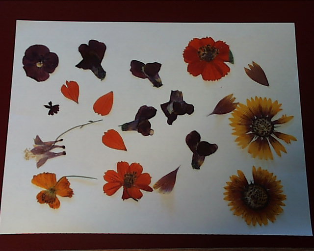 Using pressed flowers on hot buttered toast the mightylinksfo