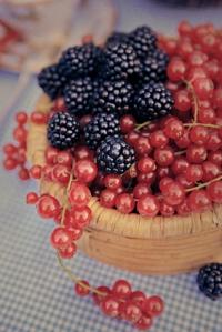 blackberries and redcurrants